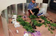 Aveva una serra di marijuana in garage, arrestato dai Carabinieri