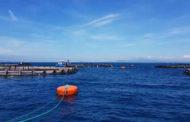 Itticoltura e morìa pesci alla Frasca, parla il Comune