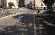 Ridipinta segnaletica via Morandi, esultano dal gruppo